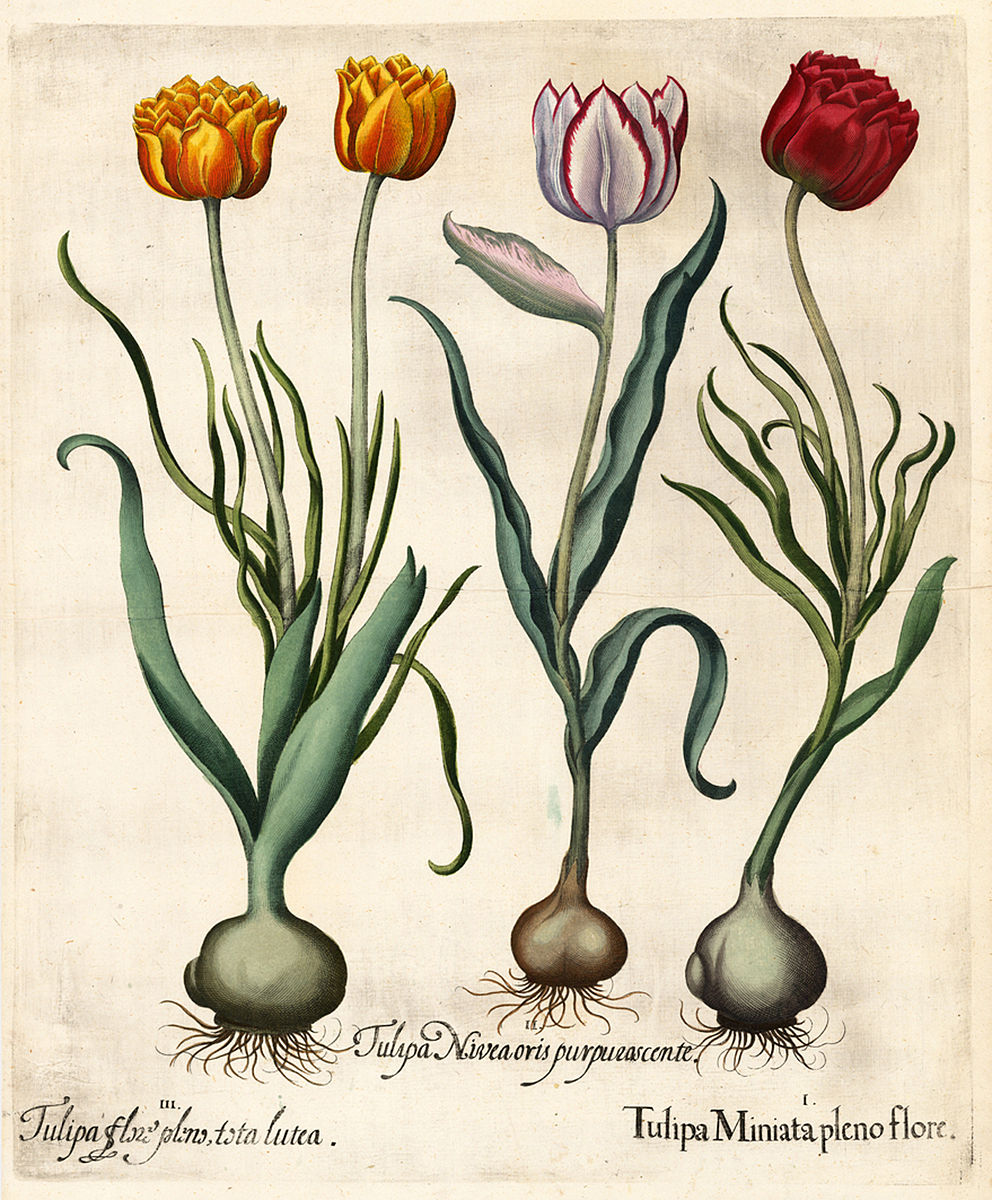 Botanical Illustrations Wonders Of Nature And Artifice